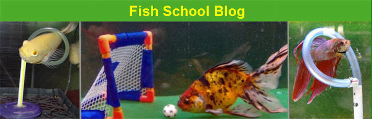 Fish School Blog