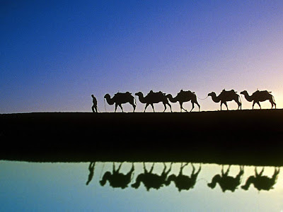 http://1.bp.blogspot.com/_3QroLHkl06c/S2fuyKn3jrI/AAAAAAAAADo/Q-pt2wcHPrs/s400/camels.jpg