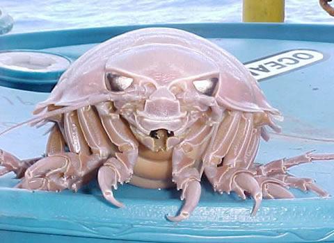 L1 Warna Warni di Dunia kepiting