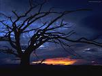 Homenaje al árbol.