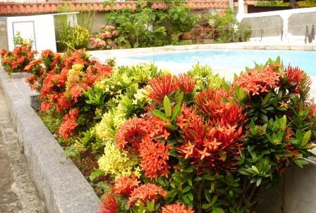 Jardinagem em casa plantas para o sol - Planta de exterior resistente ...
