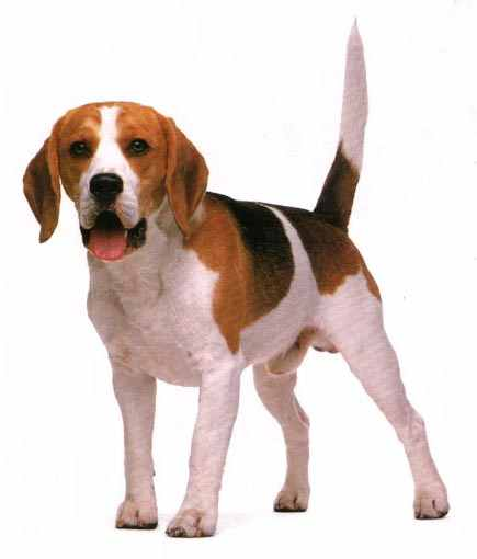 mi perro se llama toto y es muy bueno y de color marron y blanco