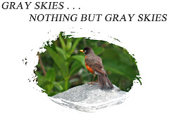 GRAY SKIES - - - NOTHING BUT GRAY SKIES