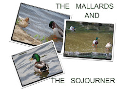 TWO MALLARDS AND A SOJOURNER