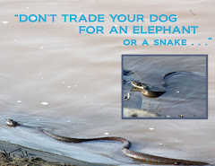 """DON'T TRADE YOUR DOG FOR AN ELEPHANT"""