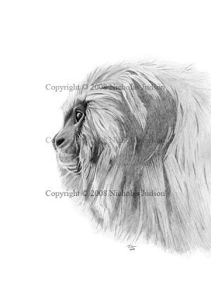 Image: Golden Lion Tamarin