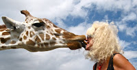 Mikki Williams kissing a Giraffe
