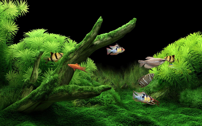 Salvapantallas en 3d dream aquarium teckbios for Protector de pantalla en movimiento