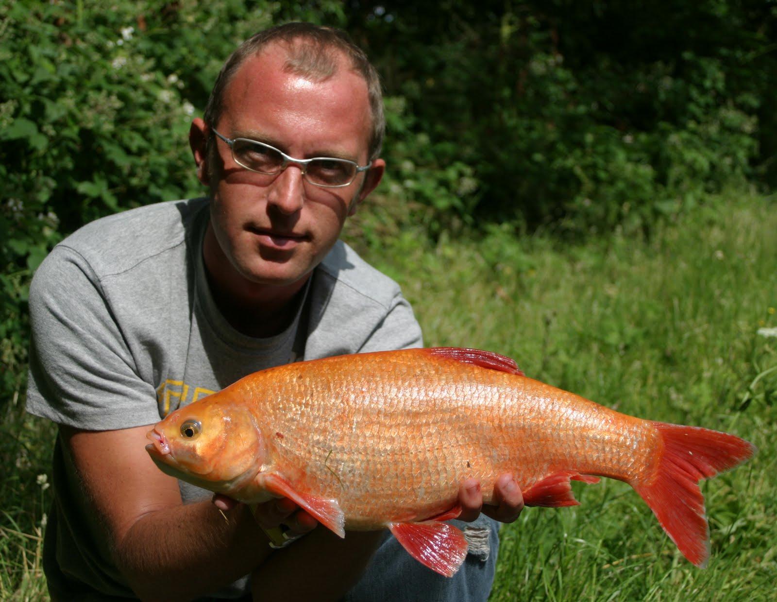 fish bash bosh !!!
