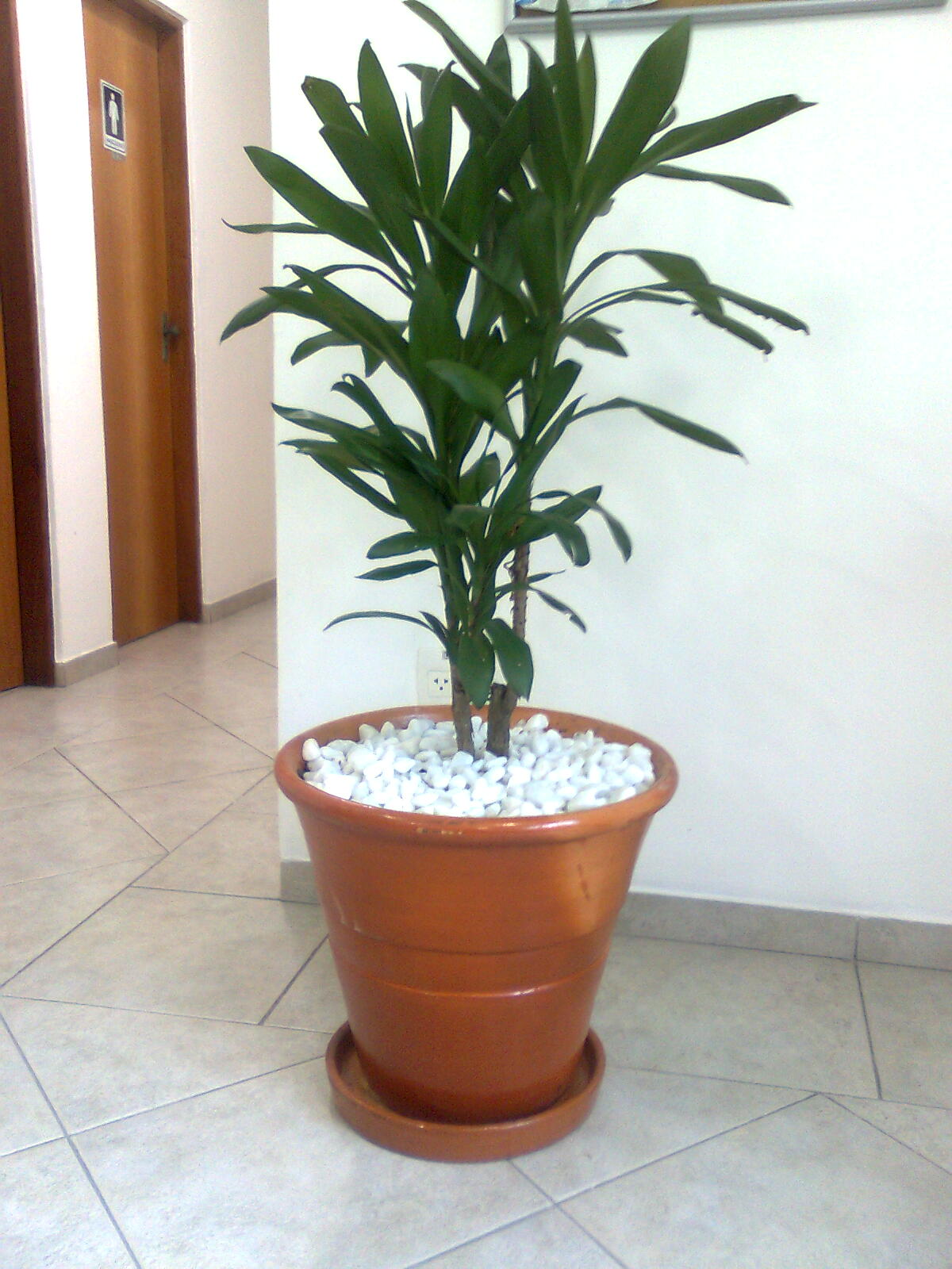 Plantas para interiores de casas vasos de flores - Plantas de flores para interiores ...