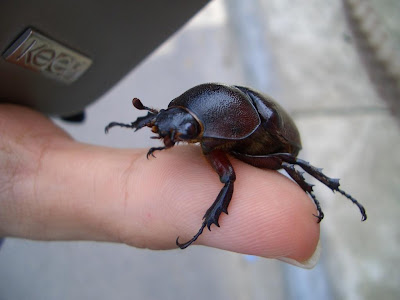 insect, beetle, animals, interaction