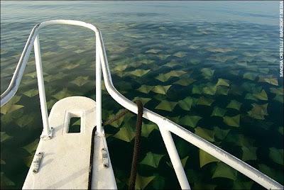 Migration, fish