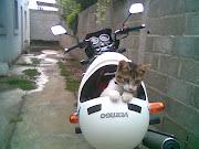El gato de mi primo
