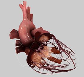 HeartWorks, corazones virtuales