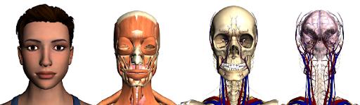 Google Body Browser Anatomía en Tres Dimensiones