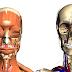 Anatomía Humana en 3D Google Body Browser