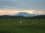 Gunung Niut