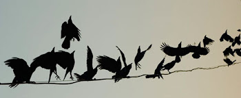 Os corvos