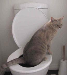 http://1.bp.blogspot.com/_3Z1J2qf3CiU/SsmO8SYEiKI/AAAAAAAAA7I/gpWgOrNVAYQ/s400/cat_toilet.jpg