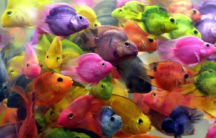 Dise o de imagen peces de colores pixelado for Peces para acuarios pequenos