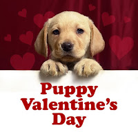 Cute Puppy Valentine Card