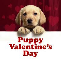 Cute Puppy Valentine Card