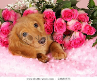 puppies for valentines day card