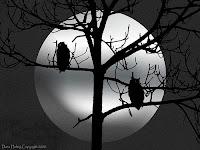 Free Wallpapers Midnight Forest Halloween Digital Art