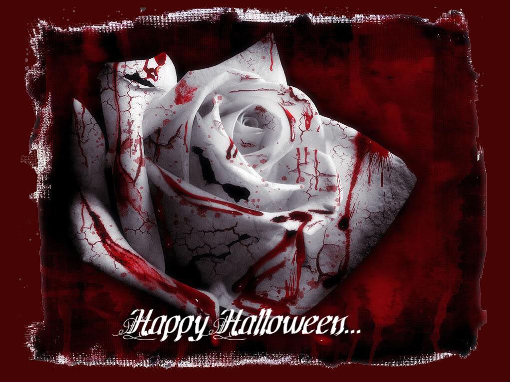 Blood red halloween wallpaper red blood rose for halloween