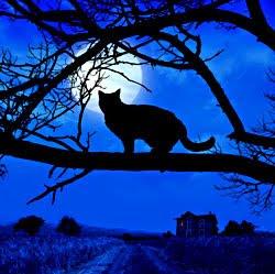 blue scary halloween night card