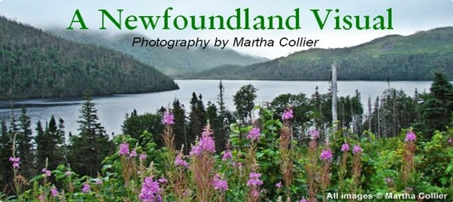 A Newfoundland Visual ~ Martha Collier Photography