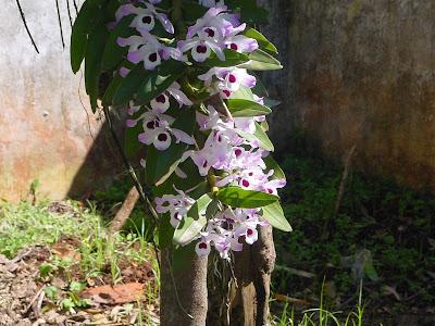 Orquídeas Nociones básicas de cultivo Parte 1