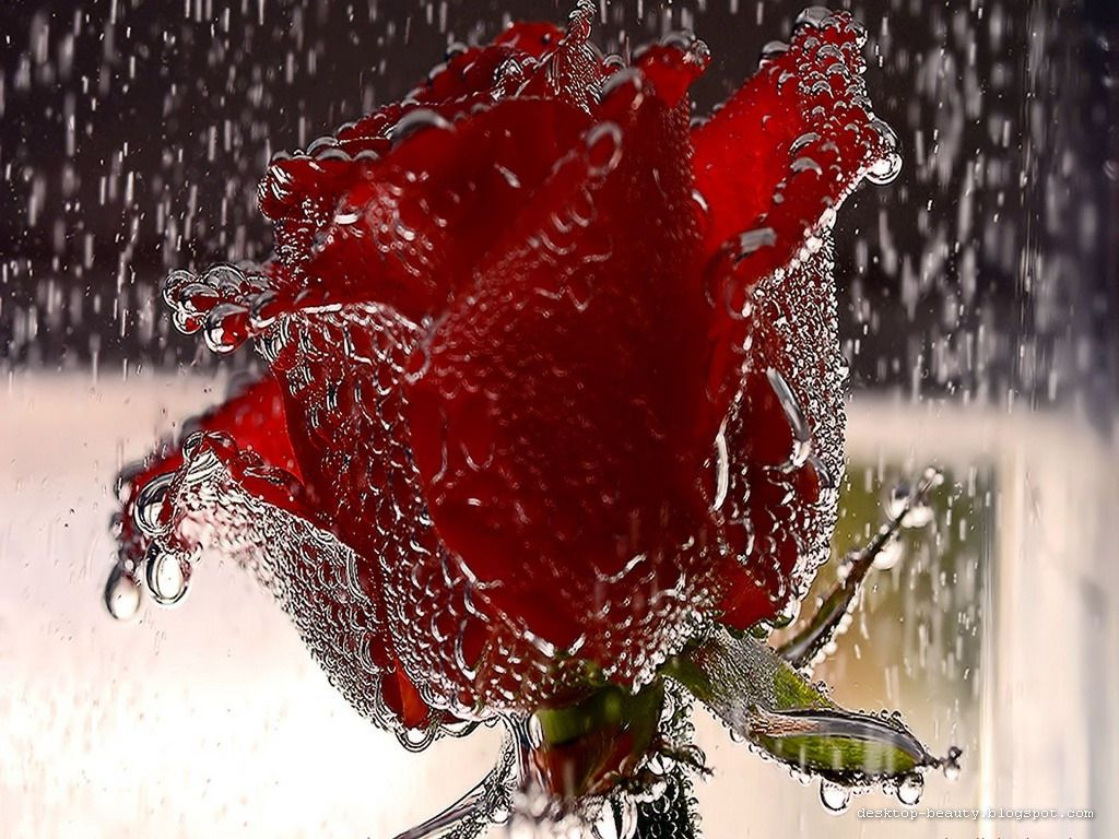 romantic rainy wallpaper - photo #32