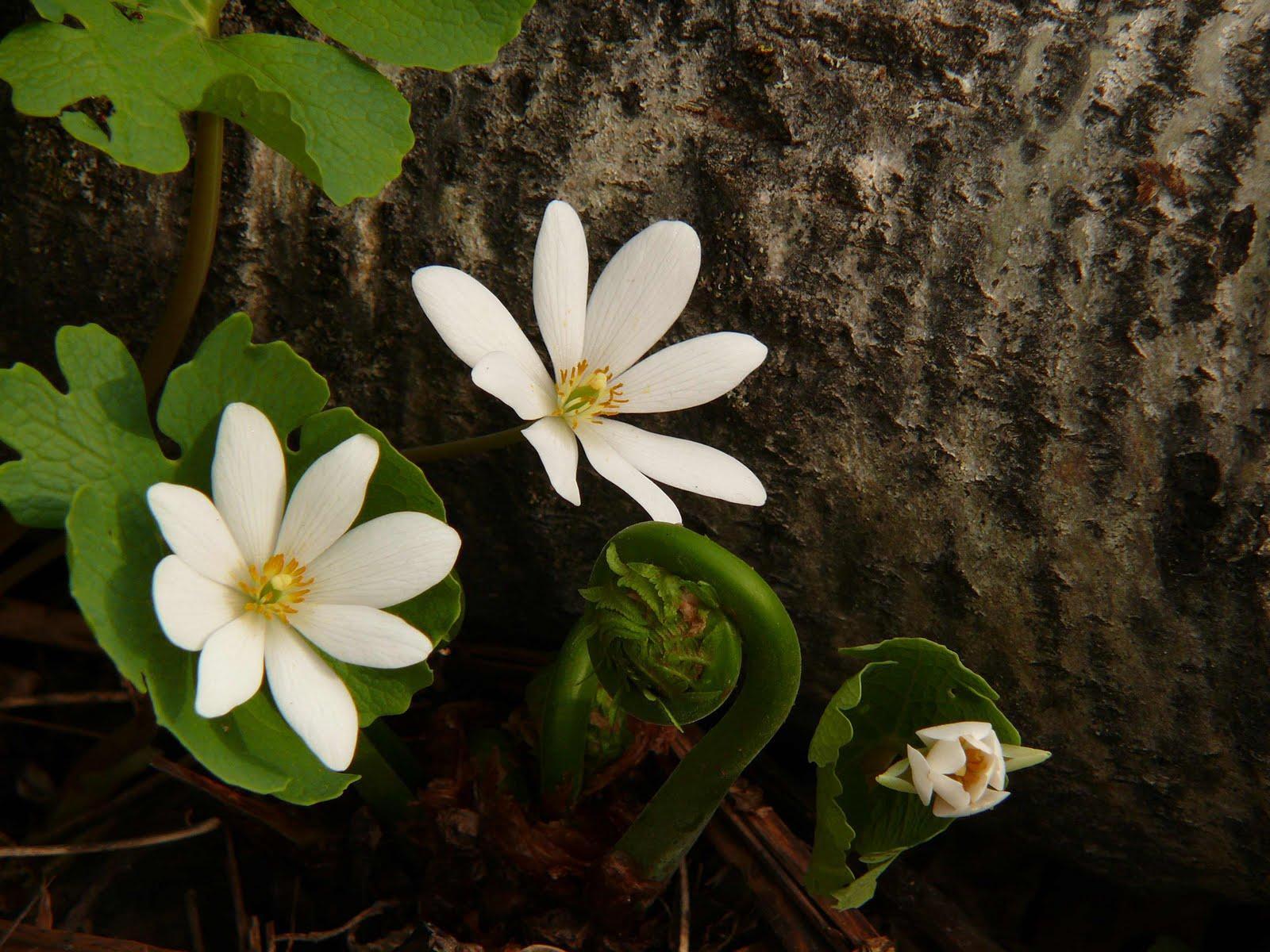 Mes quatre saisons mai 2010 ~ Fleurs Des Bois