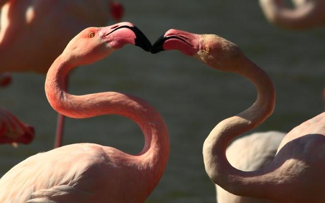 L'amour arriba a la Camarga