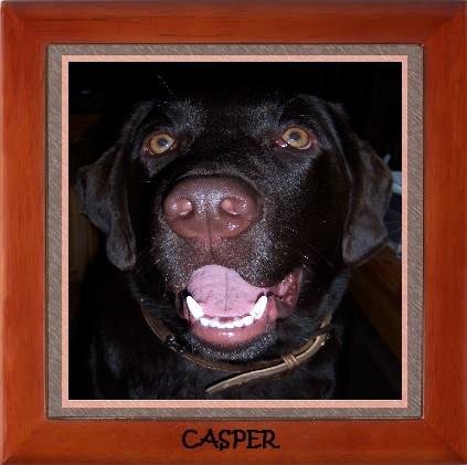 Casper - 8 months old