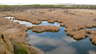 duck swamp, Worland, Wyoming
