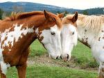 Os animais também amam!