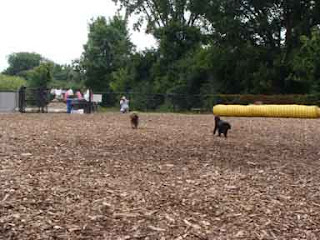 Cookie and Gigi running