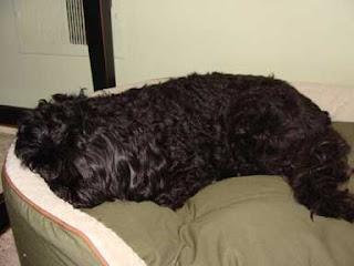 Gigi Sleeping