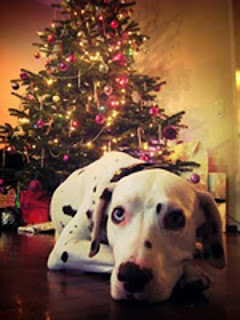 Christmas Dog by Tree