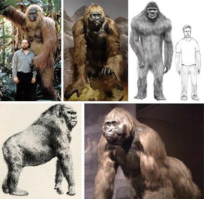 十四種已滅絕怪獸 巨猿