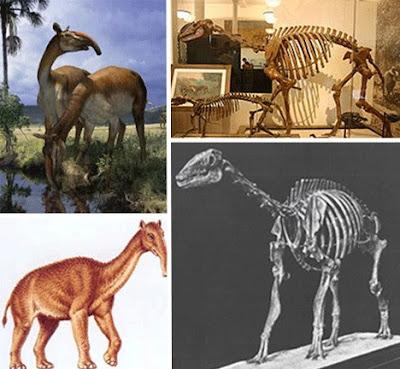 十四種已滅絕怪獸 長頸駝