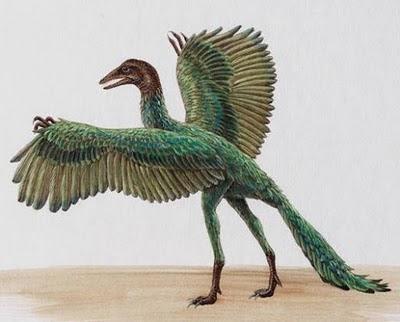 史前忍者鳥