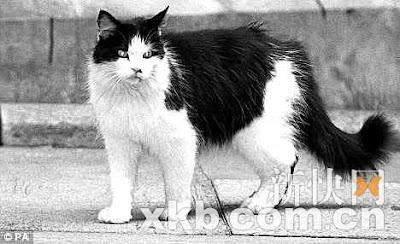 英國 貓大臣