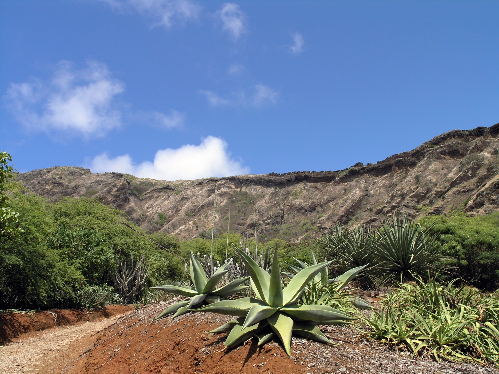 The Hot, Dry Climate Here Makes This Garden The Ideal Location For The Dry  Land Collections Of The Honolulu Botanical Gardens. The Garden Features  African ...