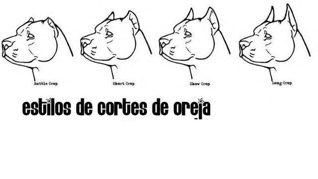 Tipos de cortes de orejas para pitbull - Imagui