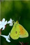 flor pequeña y mariposa