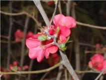 flor   de    cecilia