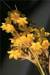 eran estas  las  flores amarillas?